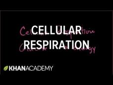 Introduction to Cellular Respiration Video