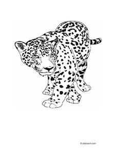 jaguar Worksheet