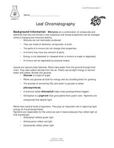 Leaf Chromatography Lesson Plan