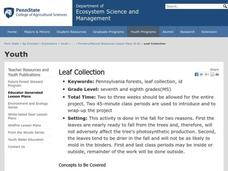 Leaf Collection Lesson Plan