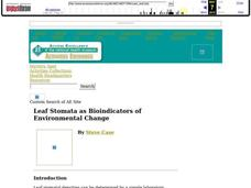 Leaf Stomata as Bioindicators of Environmental Change Lesson Plan