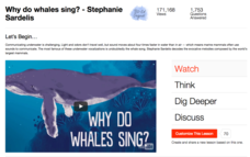 Why Do Whales Sing? Video