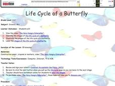 Life Cycle of a Butterfly Lesson Plan