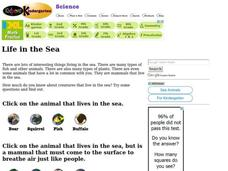 Life in the Sea Interactive