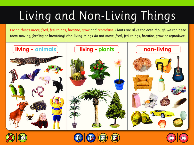Living and Non Living Things Lesson Plans Worksheets – Living and Nonliving Worksheet