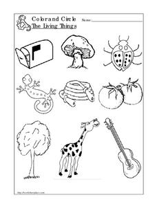 Living Things Worksheet