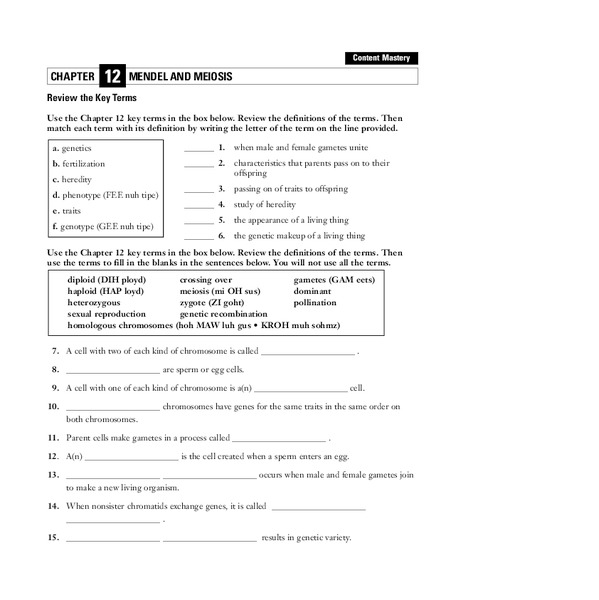 Vocabulary Worksheet Sharebrowse – Meiosis Worksheet Key