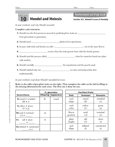 mendel and meiosis worksheet resultinfos. Black Bedroom Furniture Sets. Home Design Ideas