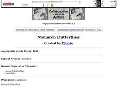 Monarch Butterflies Lesson Plan
