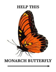 Monarch Butterfly Worksheet