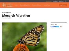 Monarch Migration Video