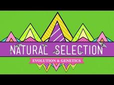 Natural Selection Video