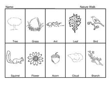 Nature Walk Worksheet