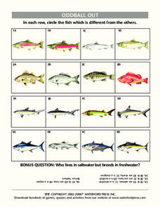 Oddball Out: Fish Lesson Plan
