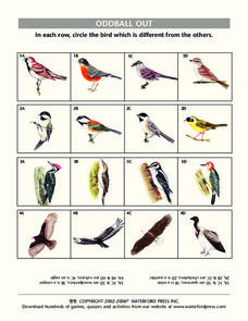 Oddball Out: Birds Lesson Plan