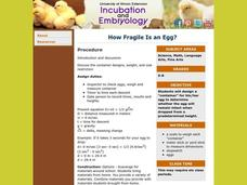 How Fragile Is an Egg? Lesson Plan
