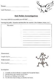 Owl Pellet Investigation Worksheet