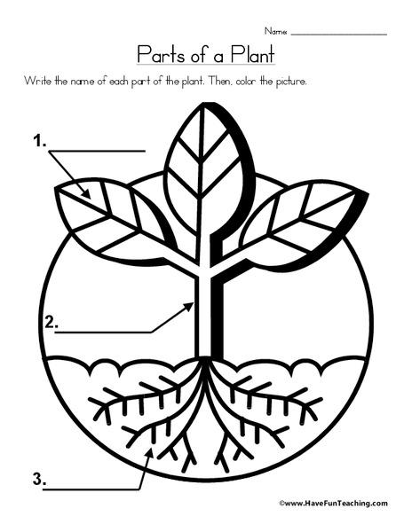 parts of a plant worksheet for 2nd grade lesson planet. Black Bedroom Furniture Sets. Home Design Ideas