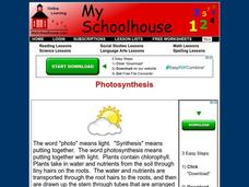 Photosynthesis Interactive