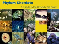 What are some examples from the phylum chordata?