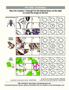 Picture Scramble Lesson Plan