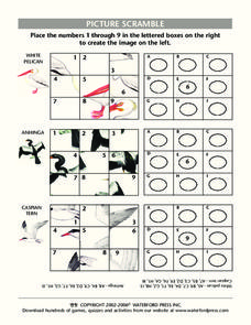 Picture Scramble: Birds Lesson Plan