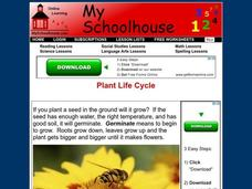 Plant Life Cycle Interactive