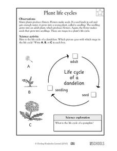 Plant Life Cycles Worksheet for Kindergarten - 2nd Grade ...