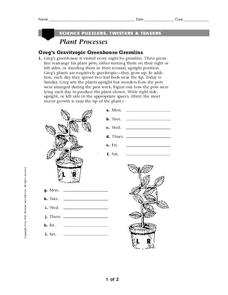 Plant Processes Worksheet