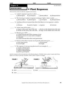Plant Responses Worksheet