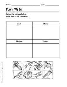 Plants We Eat Worksheet