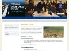 Fish Life Cycle Lesson Plan