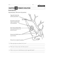 opposable thumb lesson plans worksheets reviewed by teachers. Black Bedroom Furniture Sets. Home Design Ideas