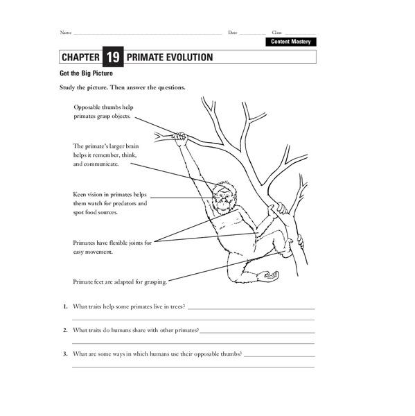31 Human Evolution Worksheet Pdf - Worksheet Project List