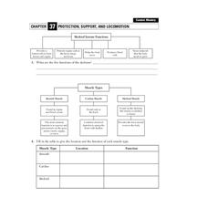 Protection, Support, and Locomotion Worksheet