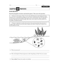 Protists Worksheet