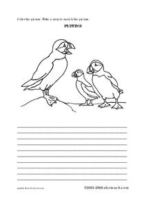 Puffins Worksheet