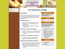The Importance of Eggs Lesson Plan