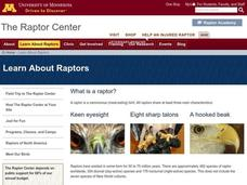 Radical Raptors Lesson Plan