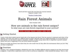 Rain Forest Animals Lesson Plan