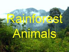 Rainforest Animals Presentation
