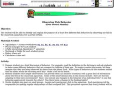 Science: Observing Fish Behavior Lesson Plan