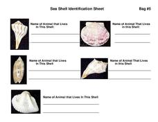 Sea Shell Identification Sheet Worksheet