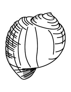 Sea Shell Picture Worksheet