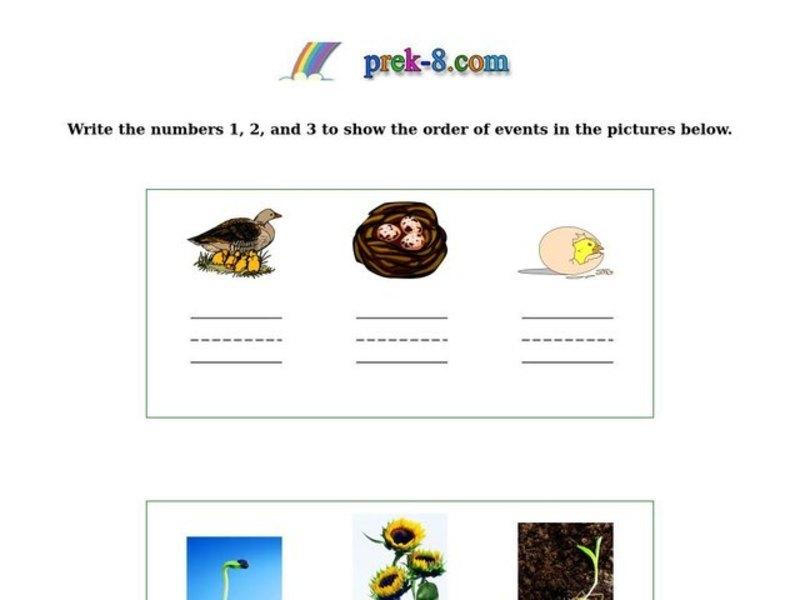 Sequential Order Worksheets Kindergarten