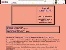 Squid Dissection Lesson Plan