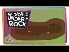 The World Under a Rock! Video