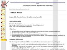 Termite Trails Lesson Plan