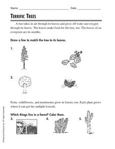 Terrific Trees Worksheet