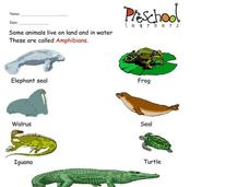 Amphibians Worksheet